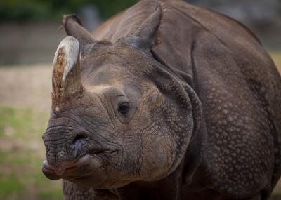Safari Wildlife Package Nepal